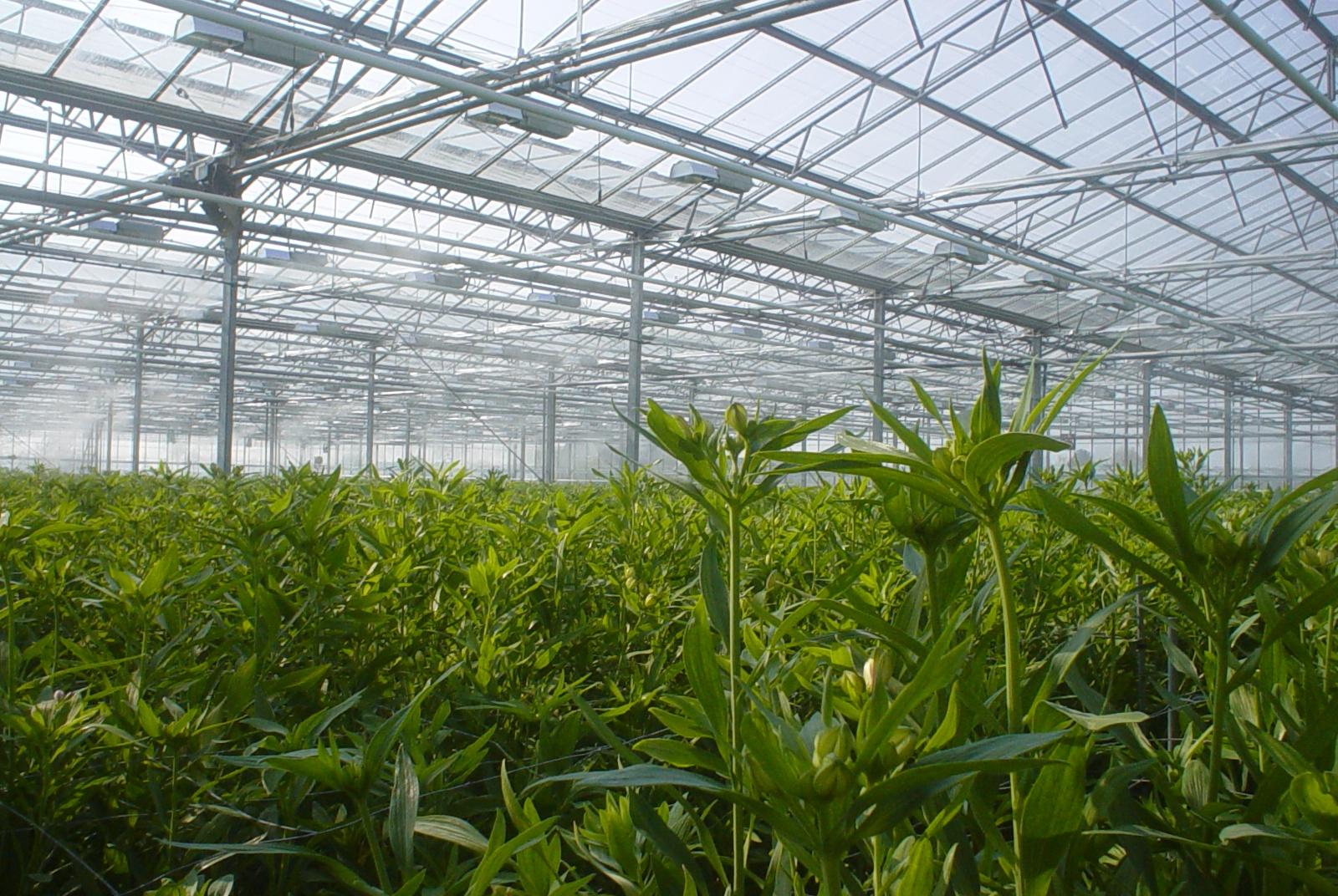 Dit is de hoofdfoto van deze pagina, (glas)tuinbouw. Afgebeeld zijn jonge planten in een kas die bevochtigt wordt met een mistsysteem van Reldair. Hier lees je meer over de systemen die Reldair biedt om te bevochtigen of koelen in een kasklimaat.